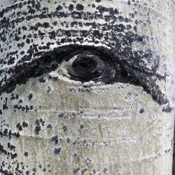 Aspen Eye 1