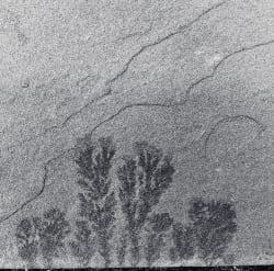 Slate Tree